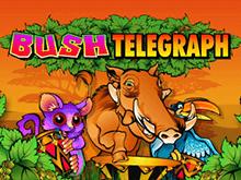 Классическая 5-барабанная азартная онлайн-игра Bush Telegraph